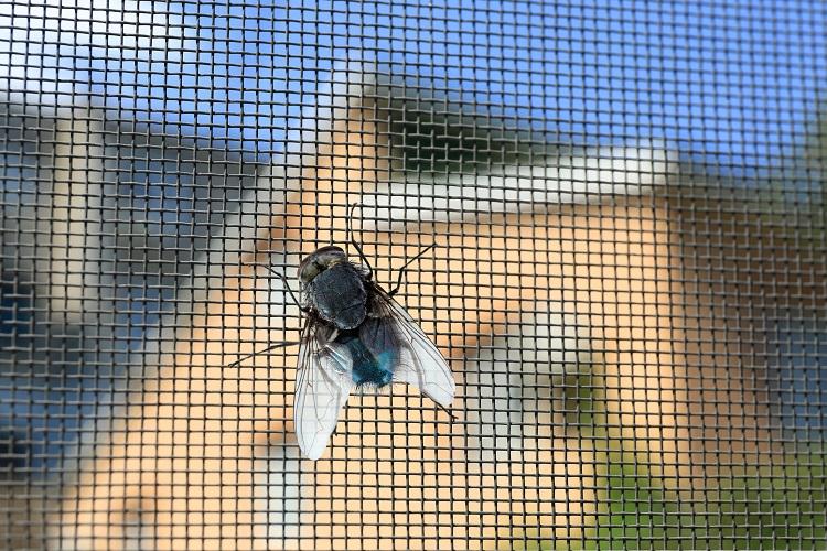 Tür Moskitonetze Sicherung gegen Insekten