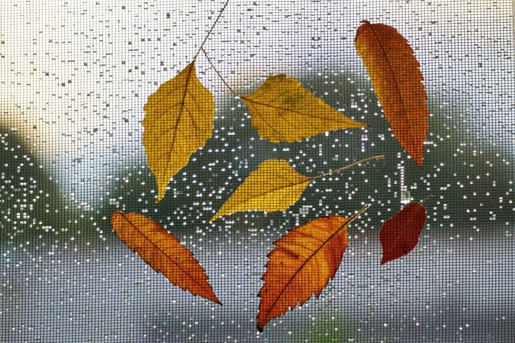 Wetterfestes Moskitonetz für das Fenster
